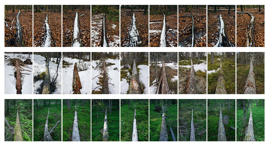 Héctor Hernández Rosas. Fallen trees. When trees speak