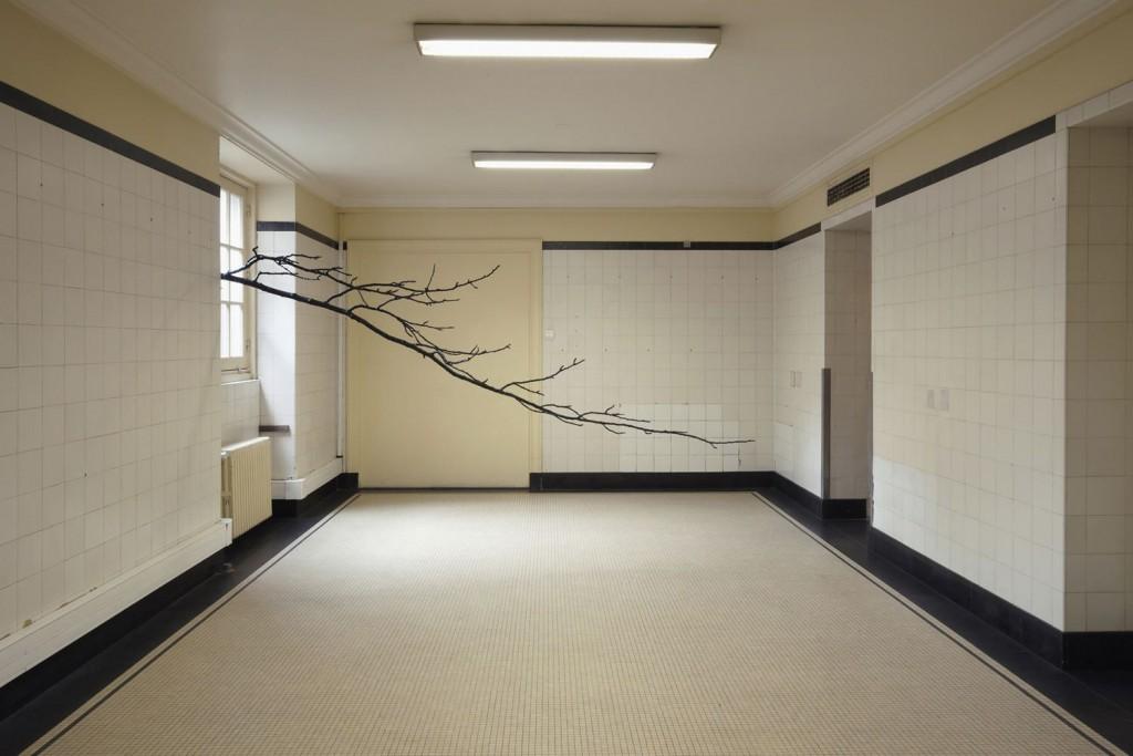 Paula Anta. Arbre 01. Serie L'Architecture des arbres