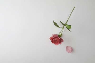 Yoshihiro Suda. Rose, 2013. Galería Elvira González