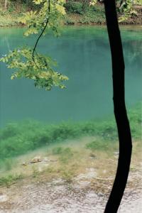 Wolfgang Tillmans. Blautopf, Baum, 2001