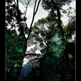 Caio Reisewitz. Boracéia, 2012. Cortesía de Luciana Brito Galeria, São Paulo. © Caio Reisewitz
