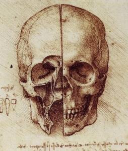 Leonardo da Vinci. Cráneo. Sección sagital frontal, 1489