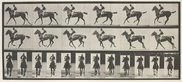Eadweard Muybridge. Cheval au galop, 1887. Musée d´ Orsay