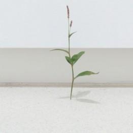 Suda Yoshihiro: poesía desde el hiperrealismo