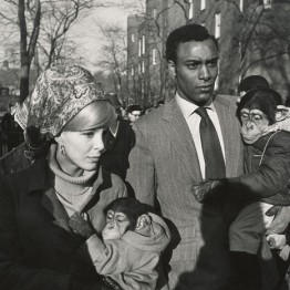 Garry Winogrand. Central Park Zoo, New York, 1967
