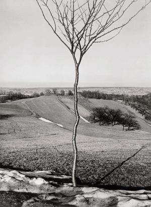 Albert Renger-Patzsch. El arbolito, 1928