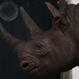 Javier Téllez. O Rinoceronte de Durer (Durer´s Rhinoceros), 2010
