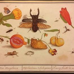 Zoología y botánica exquisitas, de TEFAF al Rijksmuseum