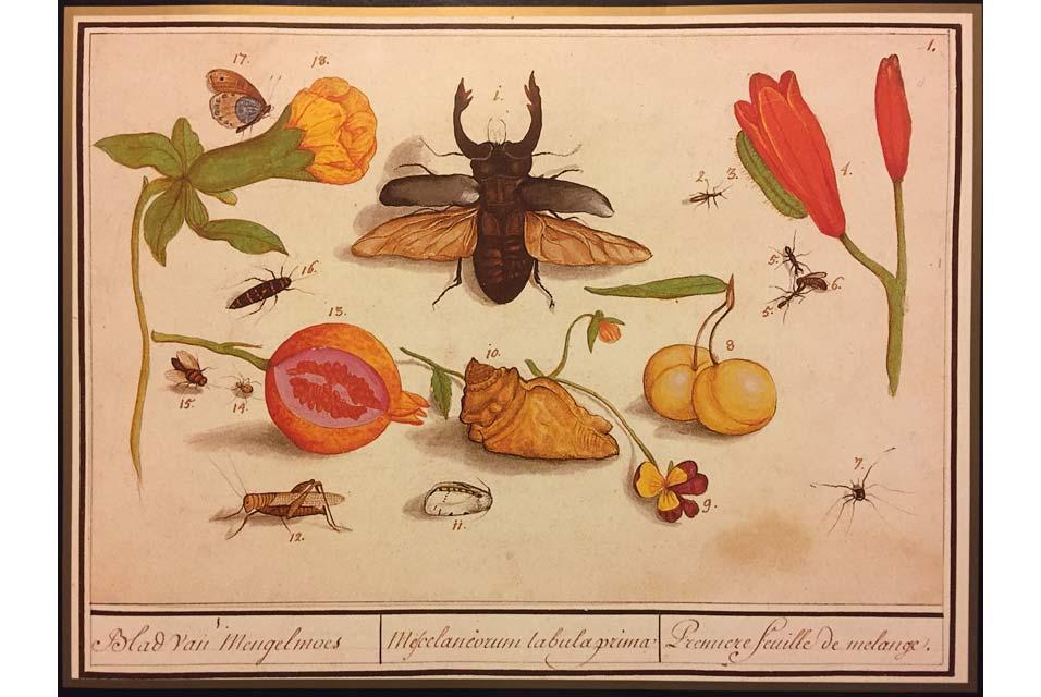 Anselmus de Boodt. Historia Naturalis
