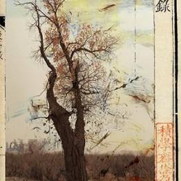 El Museu Europeu d'Art Modern muestra la obra del artista chino Wenjun Fu