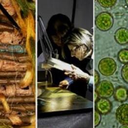La Ciencia y el Arte V. Ciencias y tecnologías aplicadas a la conservación del patrimonio