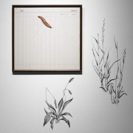 Tamara Feijoo. Naturalezas invasoras, 2013