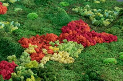 Esther Pizarro. Un jardín japonés: topografías del vacío