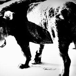 Audio: Stray Dog, Misawa (Daido Moriyama)