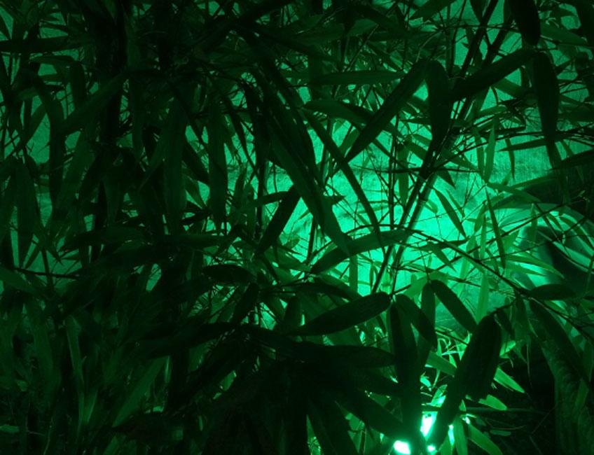 Christian Lagata. Verde Chroma