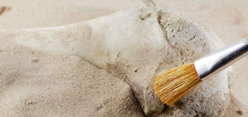 La Fundación Palarq convoca el Premio Nacional de Arqueología y Paleontología