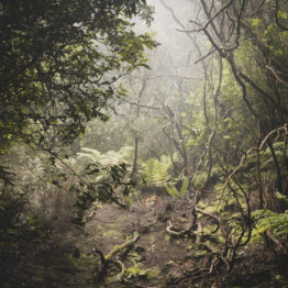 Francisco Miguel Morales, mejor talento emergente de fotografía del año según Solán de Cabras