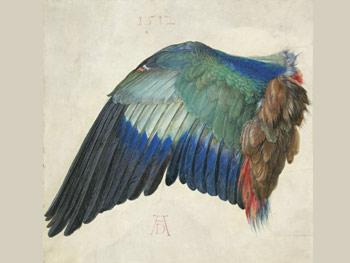 Alberto Durero Ala de una carraca, 1500-1512 Viena, Albertina Museum