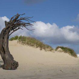 Els Dietvorst. Windswept. BEAUFORT 2021