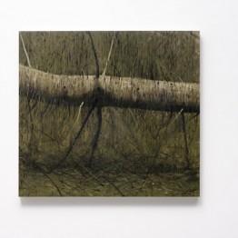 Hugo Fontela. Dead Fallen Tree I, 2013