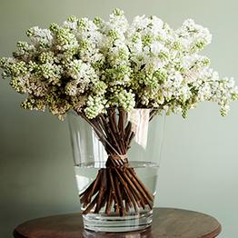 Fuera de menu masdearte, MOSS floristas (lilas)