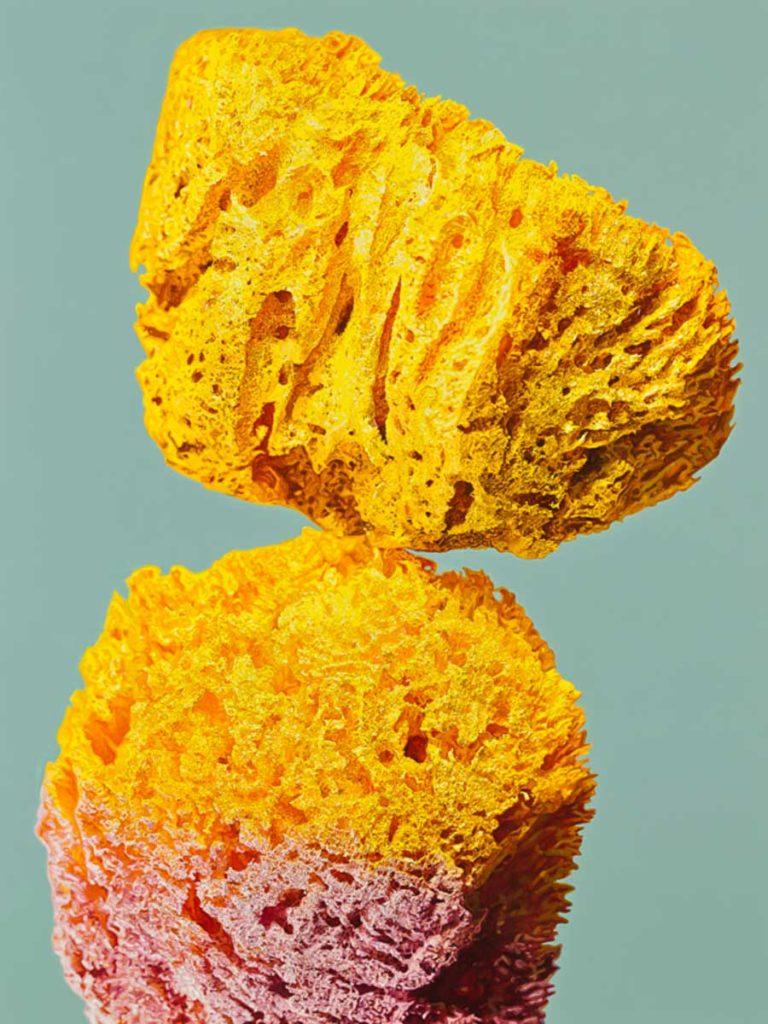 Javier Palacios. Yellow Soul Sponge