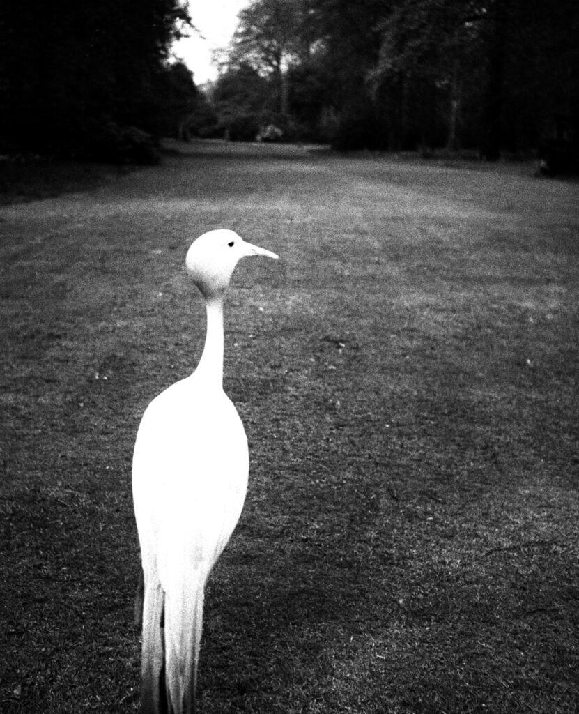 Bill Brandt. Tarde en Kew Gardens, 1932. Cortesía de Bill Brandt Archive and Edwynn Houk Gallery © Bill Brandt / Bill Brandt Archive Ltd