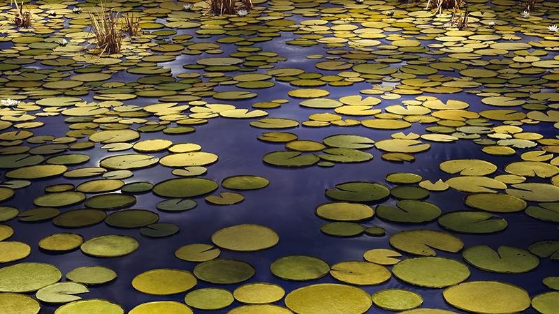 Thomas Demand. Pond, 2020
