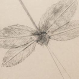 Max Ernst y lo que en la naturaleza hay de diseño