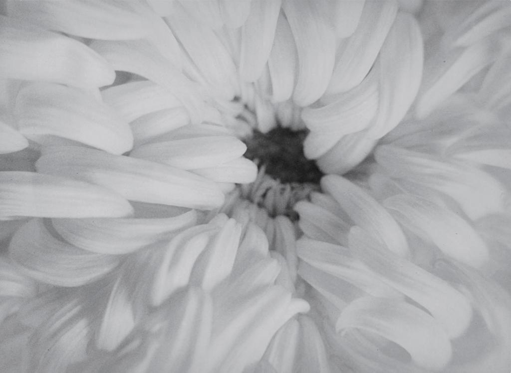 Raoul Hausmann. Sin título (flor de crisantemo), 1927-1933