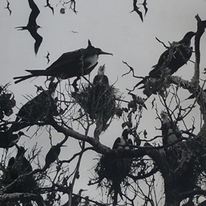 Graciela Iturbide. Pájaros en Nayarit. México, 1984