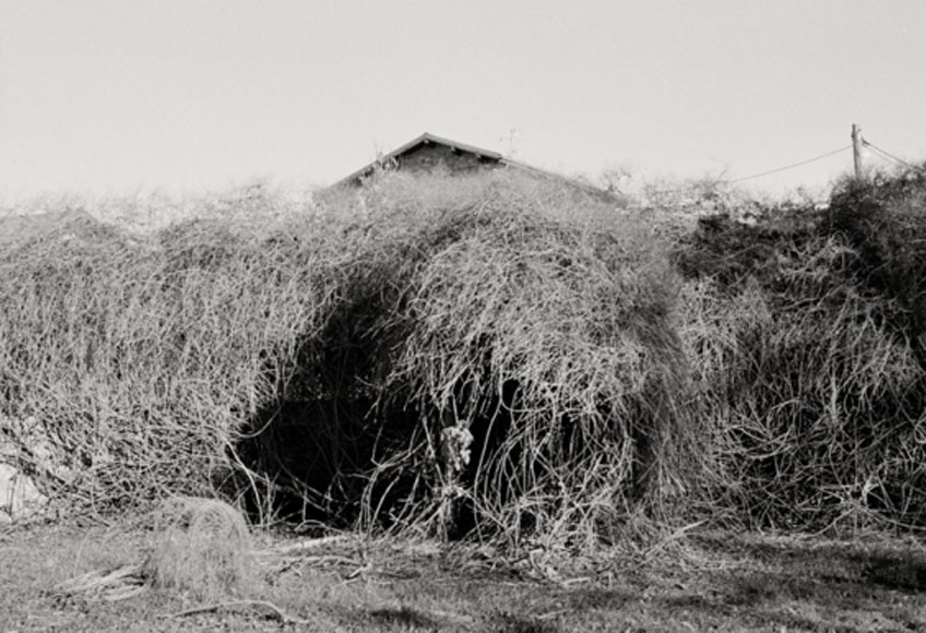 Gael del Río. Serie Evocare, 2017 © Gael del Río