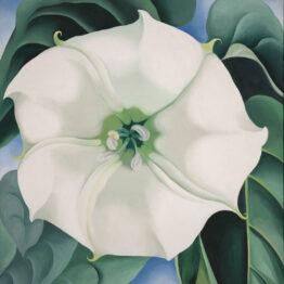 O'Keeffe, el tiempo para ver realmente una flor
