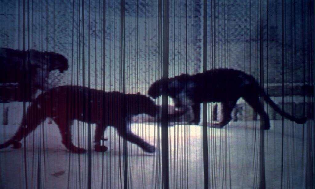 Paloma Navares. Sombras del sueño profundo, 1986