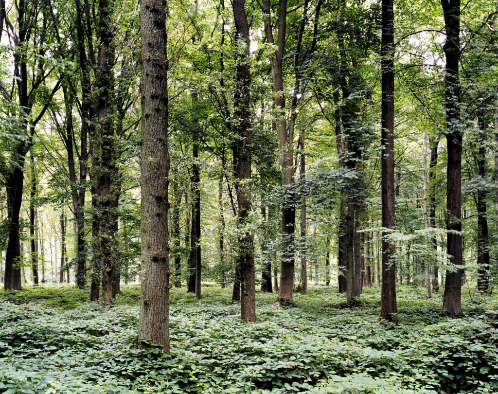Tomoko Yoneda. Forest—Location of the Battle of Somme, Delville Wood, France, 2002. De la serie Escenario