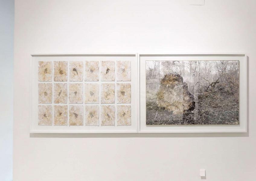 """""""¡Tierra a la vista! Un paisaje de formas encontradas"""". Galería Ponce + Robles"""