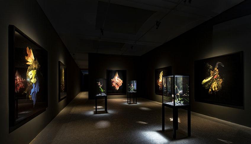 Mat Collishaw. Dialogues. Fundación Sorigué - Pabellón Villanueva del Jardín Botánico de Madrid. Hasta el 24 de mayo de 2019