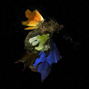 Mat Collishaw, Insecticide 15, 2009 Fotografía digital C-Print