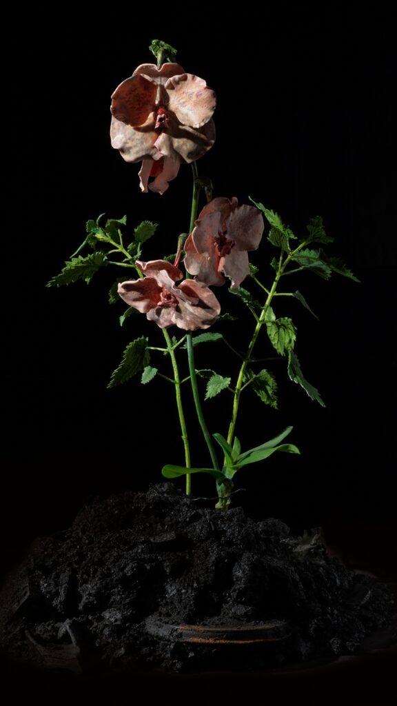 Mat Collishaw, The Venal Muse. Impetus, 2012