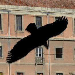 Juan Zamora. The Vulture Shadow